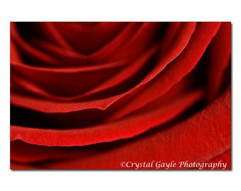 Scarlet Red Rose Flower Photography, Romantic Bedroom Wall Print, Crimson Floral, Anniversery Gift Idea for Her, Valentine's Day Gift