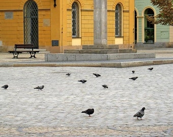 """Fine Art Color Travel Photography of Poland - """"Pigeons In the Square - Wroclaw"""""""