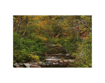 "Fine Art Color Landscape Photography of Hawn State Park in Missouri - ""Pickle Creek in Early Autumn 1"""