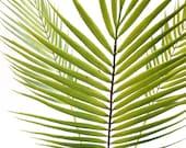Silk flower arrangement, palm leaf, palm tree, faux palm, tropical leaf, faux plant, artificial plant, tropical decor, greenery, centerpiece