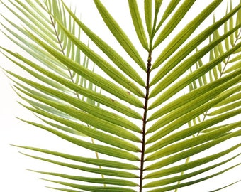 Silk flower arrangement, palm leaf, palm tree, faux palm, tropical leaf, faux plant, jungalow, tropical decor, greenery, centerpiece