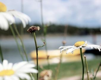 Flower photography kayak lake print