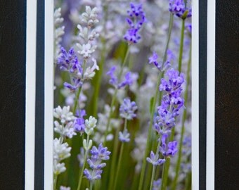 Photo Greeting Card, Lavender Flowers, Blank Inside