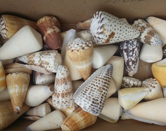 Mixed Cone Shell Geometric Pattern Tan Spiral Top SeaShell, Arts Crafts Home Decor Craft Supplies Natural Ocean Beach Wedding