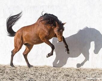 Dancing with Shadows - Fine Art Horse Photograph - Horse - Lusitano - Fine Art Print