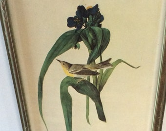 Vintage Audubon Book Plate Framed Print / Green Carved Wooden Frame / Yellow Warbler Print