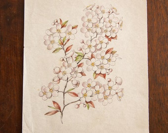 Antique Saturated Prunus Watercolor, Casual Sketch Series