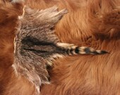Raccoon Back Hide Fur Pieces- Pelts for crafting, sewing, displays