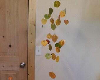 Real Aspen Leaf Mobile #2