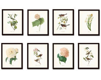 Bird and Botanical Print Set No. 4, Redoute Botanical Prints, Audubon Bird Prints, Giclee, Wall Art, Prints, Flower Prints, Print Sets