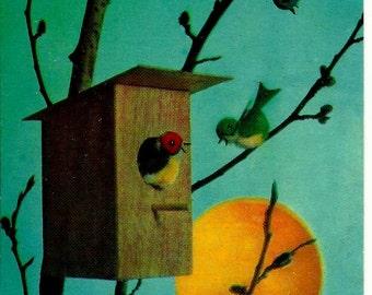 Birds, Spring, nesting box, Sun, Vintage  Russian Postcard, print 1970 unused