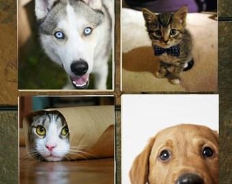 Pet Lovers Customized Coasters Set