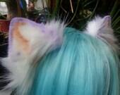 white and lavender kitten ears