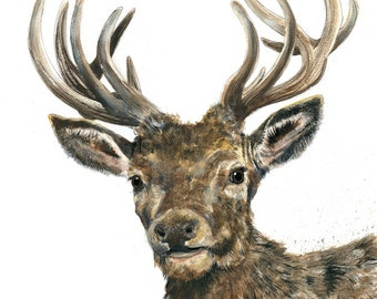 Mounted Limited Edition Giclee Print of 'Stanley' the Stag