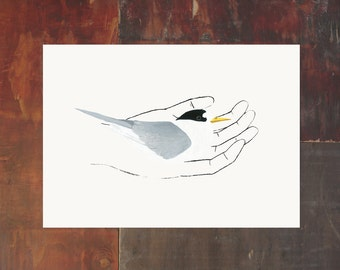 Bird In Hand Print - Fairy Tern - New Zealand Bird