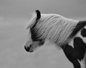 Horse Photography, Black and White, Equestrian Art, Minimal Art, Pinto, Animal Photography, Large Nature Print, Horse Decor, Animal Photo