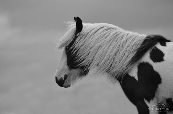Horse Photography, Black and White, Equestrian Art, Minimal Art, Pinto, Animal Photography, Large Nature Print, Horse Decor, Animal Photo