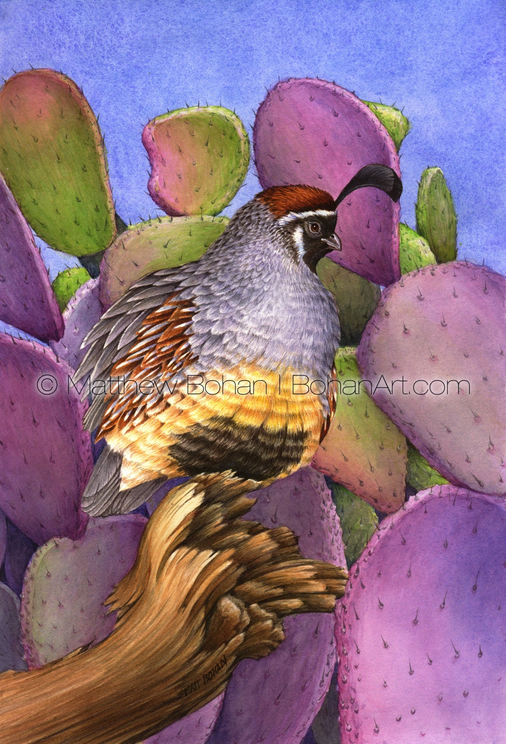 Print Of Gambel S Quail Prickly Pear Watercolor Painting