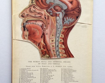 Vintage 1920 Medical Anatomy Diagram FOLD OUT Bookplate SKULL Head Brain Muscles Svankmajer Collage Material