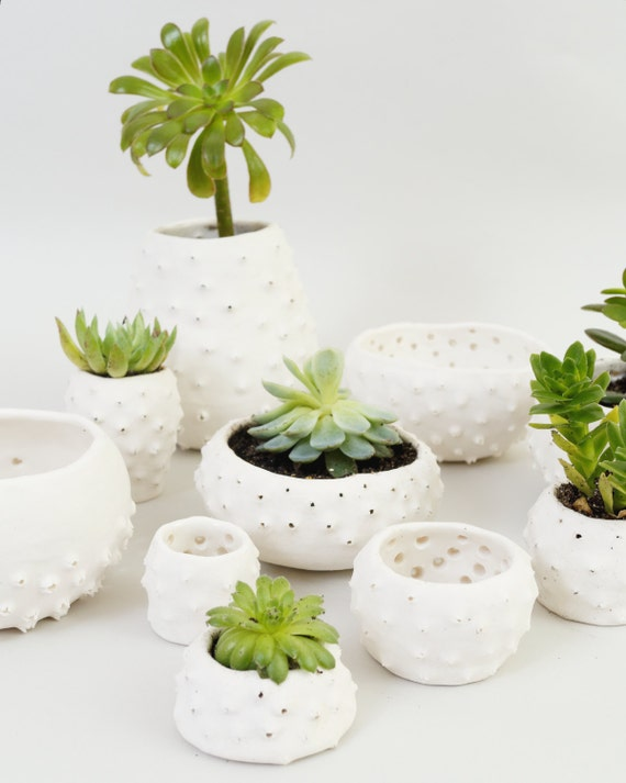 modern ceramic planters small mini plant pots handmade white ceramic bowls sculptural urchin pots british studio pottery brighton uk