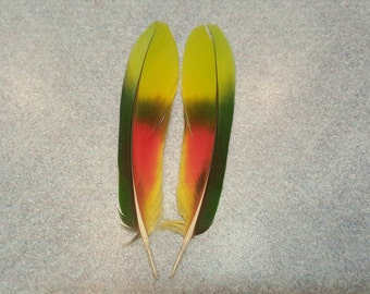 "Matched Pair Amazon Parrot 4 1/2"" Tail Feathers AM1"