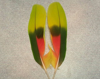 "Matched Pair Amazon Parrot 5"" Tail Feathers AM5"