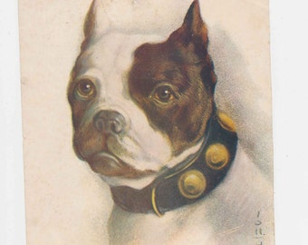 vintage print, dog print, dog breed, Boston Terrier, dog head