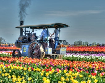 Wood fired tractor, bright tulips vivid color photograph