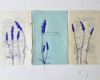 Lavenders Blue Dilly Dilly, Illustration on Vintage Papper