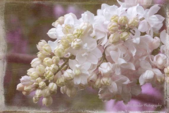 Photo, Double Bloom Lilacs, Photography, Nature Lover, Botanical, Flower, Floral, Garden, Fine Art, Home Decor, Housewarming Gift, Gift Idea
