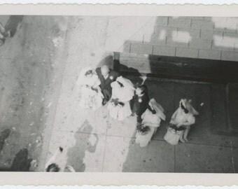 Wedding Party, Photographer Shadow, Overhead View, 1947 Vintage Snapshot Photo (65464)