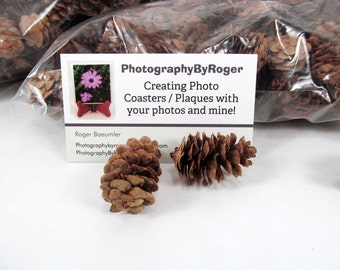 100 Mini Pine Cones Baked and ready for your crafting needs, FI131