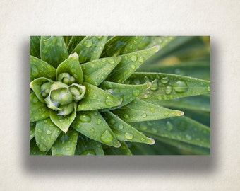 Plant After Rain Canvas Art, Plantlife Wall Art, Plant Canvas Print, Close Up Wall Art, Photograph, Canvas Print, Home Art, Wall Art Canvas