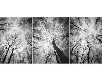Set of 3 Black and White Tree Photographs, forest, woodland, trees, sky, gray wall decor, man cave, print set