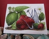 Strawberry Dragon Notecards Set of 4