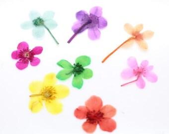 10 pcs o Real dry flower oganic Flower pressed flower 20mm-25mm- you can choose color