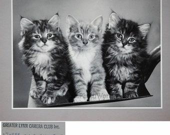 Three cute kittens large vintage art cat photo by Michael Videtta