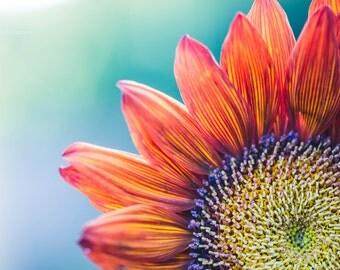 sunflower photograph, autumn photography, sunflowers, aqua decor, sunflower art, kitchen art, photo of a sunflower, happy art, orange purple