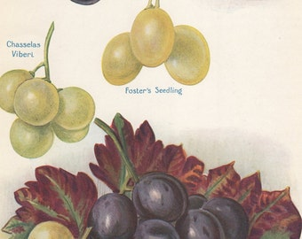 the grape grower a guide to organic viticulture