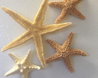 Set of 4 Starfish Magnets