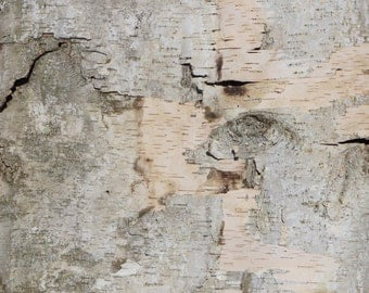 Natural birch bark, birch wood