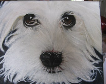 Maltese Terrier on Canvas