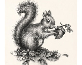 Squirrel - Illustration - Fine Art Print