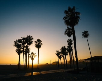 Palm trees on the beach at sunset in Santa Monica, California. | Photo Print, Stretched Canvas, or Metal Print.