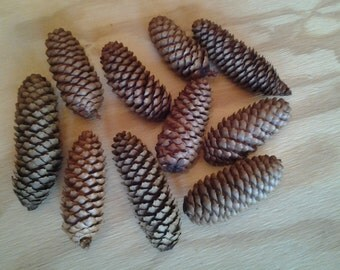 10 Spruce Pine Cones