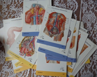 Random Chosen Human Anatomy Anatomical Flash Cards. Collage, Craft, Creepy, Spooky, Halloween, found object, biology, gore, science, mad