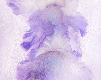 "Large Floral Fine Art Print ""Beauty Pageant"" on WaterColor Paper. Botanical Abstract  FineArt Photography. Violet Wall Decor Extra"