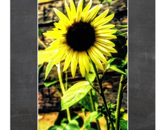 Summer Sunflower Print