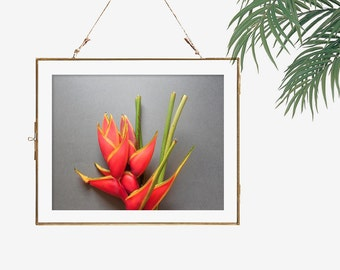 Flower photography tropical print vibrant color wall art nature photo bright orange grey yellow decorative art botanical decor still life