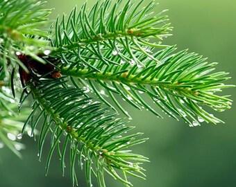 Pine Fragrance oil Oil 1-16 Ounce Full Strength Wholesale